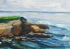 La Jolla Cove 093